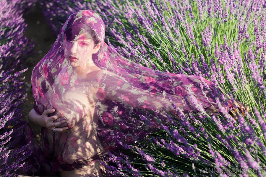 May yannick phx photographie nue lavande valensol